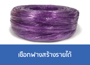 เชือกฟางของคนไทยสร้างรายได้คืนประเทศเชือกฟางrtpthailand