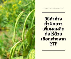 วิธีทำค้างถั่วฝักยาว เพิ่มผลผลิตต่อไร่ด้วยเชือกฟางจาก RTP ในวันนี้เราจะมาแนะนำการค้างถั่วฝักยาวด้วยเชือกฟางแบบชาวเกษตรกรกันค่ะ